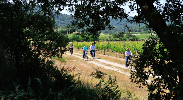 Las bodegas de la Ruta del Vino Ribera del Duero recibieron más de 187.000 visitas en 2014