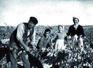 El pequeño Emilio Moro (fundador de la bodega) aprende a trabajar en la viña junto a su familia.