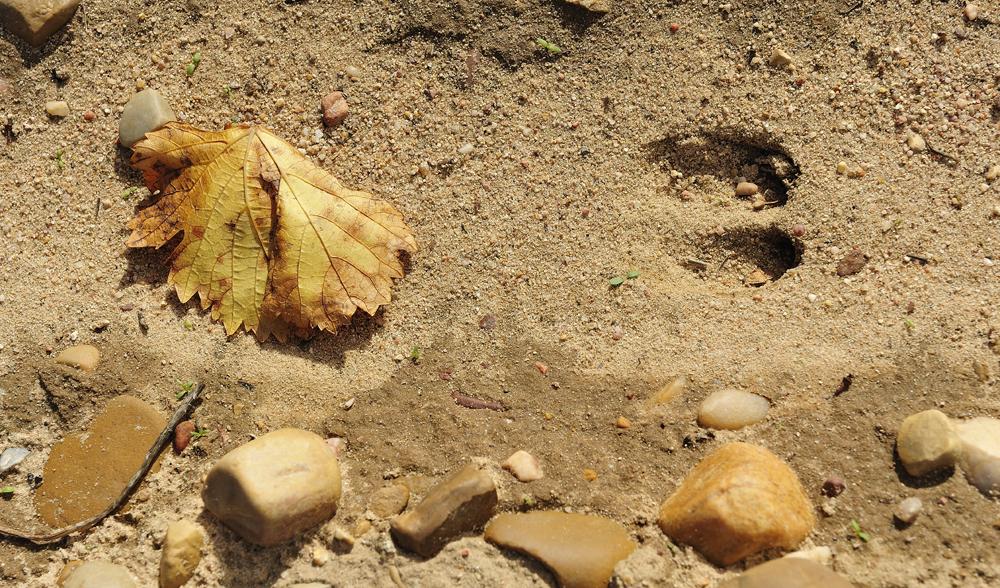 Naturaleza y viñedo en la DO Rueda. Imagen, José Miguel Martín
