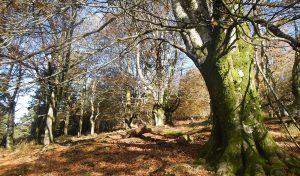 bosque_cyl