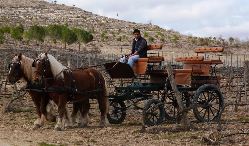 Una de las opciones de visita a Curiel son los paseos en carruaje.