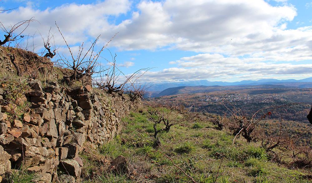 5-viticultura-bancales_sb