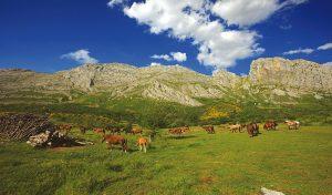 valle-riano-(3)